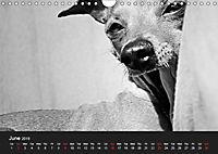 A dog's life / UK Version (Wall Calendar 2019 DIN A4 Landscape) - Produktdetailbild 6