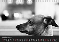 A dog's life / UK Version (Wall Calendar 2019 DIN A4 Landscape) - Produktdetailbild 12