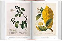 A Garden Eden. Masterpieces of Botanical Illustration - Produktdetailbild 5