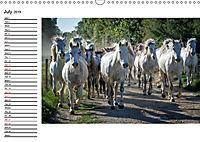 A Look at the Provence (Wall Calendar 2019 DIN A3 Landscape) - Produktdetailbild 7