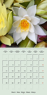 A Potpourri of Waterlilies (Wall Calendar 2019 300 × 300 mm Square) - Produktdetailbild 3