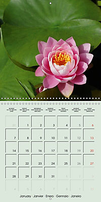 A Potpourri of Waterlilies (Wall Calendar 2019 300 × 300 mm Square) - Produktdetailbild 1