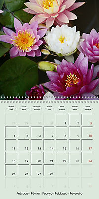 A Potpourri of Waterlilies (Wall Calendar 2019 300 × 300 mm Square) - Produktdetailbild 2