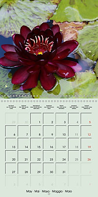 A Potpourri of Waterlilies (Wall Calendar 2019 300 × 300 mm Square) - Produktdetailbild 5