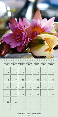 A Potpourri of Waterlilies (Wall Calendar 2019 300 × 300 mm Square) - Produktdetailbild 4