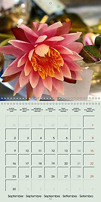 A Potpourri of Waterlilies (Wall Calendar 2019 300 × 300 mm Square) - Produktdetailbild 9
