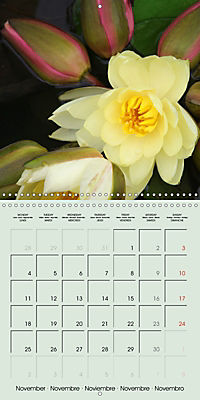 A Potpourri of Waterlilies (Wall Calendar 2019 300 × 300 mm Square) - Produktdetailbild 11