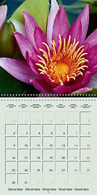 A Potpourri of Waterlilies (Wall Calendar 2019 300 × 300 mm Square) - Produktdetailbild 12