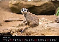 A Visit to the Zoo (Wall Calendar 2019 DIN A3 Landscape) - Produktdetailbild 1