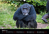 A Visit to the Zoo (Wall Calendar 2019 DIN A3 Landscape) - Produktdetailbild 3