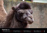 A Visit to the Zoo (Wall Calendar 2019 DIN A3 Landscape) - Produktdetailbild 9