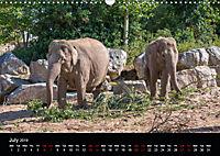 A Visit to the Zoo (Wall Calendar 2019 DIN A3 Landscape) - Produktdetailbild 7