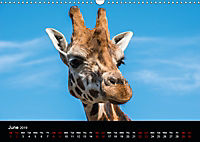 A Visit to the Zoo (Wall Calendar 2019 DIN A3 Landscape) - Produktdetailbild 6