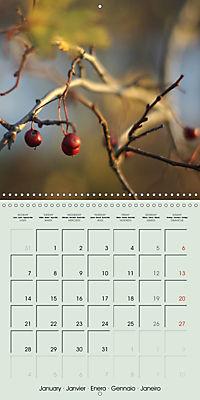 A WALK (Wall Calendar 2019 300 × 300 mm Square) - Produktdetailbild 1