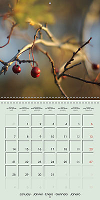 A WALK (Wall Calendar 2019 300 × 300 mm Square) - Produktdetailbild 1