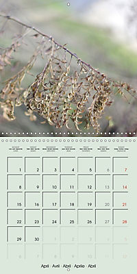 A WALK (Wall Calendar 2019 300 × 300 mm Square) - Produktdetailbild 4
