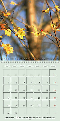 A WALK (Wall Calendar 2019 300 × 300 mm Square) - Produktdetailbild 12