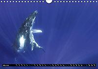 A Whale of a Year (Wall Calendar 2019 DIN A4 Landscape) - Produktdetailbild 7