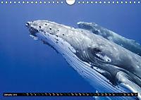 A Whale of a Year (Wall Calendar 2019 DIN A4 Landscape) - Produktdetailbild 1