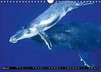 A Whale of a Year (Wall Calendar 2019 DIN A4 Landscape) - Produktdetailbild 5