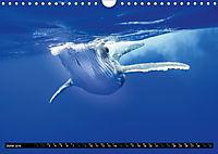 A Whale of a Year (Wall Calendar 2019 DIN A4 Landscape) - Produktdetailbild 6