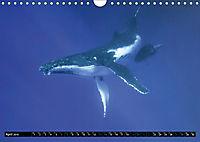 A Whale of a Year (Wall Calendar 2019 DIN A4 Landscape) - Produktdetailbild 4