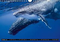 A Whale of a Year (Wall Calendar 2019 DIN A4 Landscape) - Produktdetailbild 10