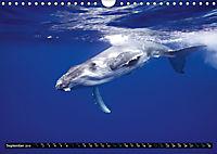A Whale of a Year (Wall Calendar 2019 DIN A4 Landscape) - Produktdetailbild 9