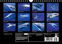 A Whale of a Year (Wall Calendar 2019 DIN A4 Landscape) - Produktdetailbild 13