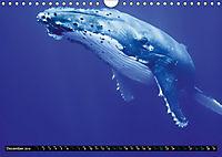 A Whale of a Year (Wall Calendar 2019 DIN A4 Landscape) - Produktdetailbild 12