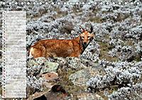 Abenteuer Äthiopien (Tischkalender 2019 DIN A5 quer) - Produktdetailbild 3