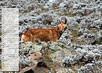 Abenteuer Äthiopien (Wandkalender 2019 DIN A3 quer) - Produktdetailbild 3