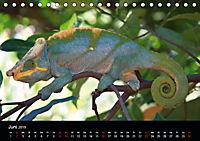 Abenteuer Madagaskar (Tischkalender 2019 DIN A5 quer) - Produktdetailbild 6