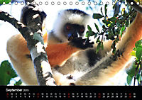Abenteuer Madagaskar (Tischkalender 2019 DIN A5 quer) - Produktdetailbild 9