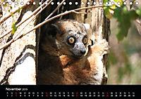 Abenteuer Madagaskar (Tischkalender 2019 DIN A5 quer) - Produktdetailbild 11