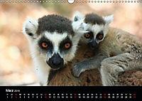 Abenteuer Madagaskar (Wandkalender 2019 DIN A3 quer) - Produktdetailbild 3