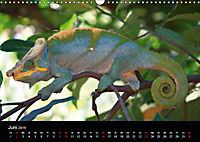 Abenteuer Madagaskar (Wandkalender 2019 DIN A3 quer) - Produktdetailbild 6