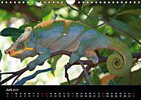 Abenteuer Madagaskar (Wandkalender 2019 DIN A4 quer) - Produktdetailbild 6