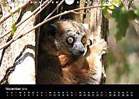 Abenteuer Madagaskar (Wandkalender 2019 DIN A4 quer) - Produktdetailbild 11