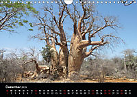 Abenteuer Madagaskar (Wandkalender 2019 DIN A4 quer) - Produktdetailbild 12