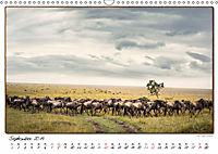 Abenteuer Masai Mara (Wandkalender 2019 DIN A3 quer) - Produktdetailbild 9