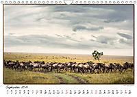 Abenteuer Masai Mara (Wandkalender 2019 DIN A4 quer) - Produktdetailbild 9