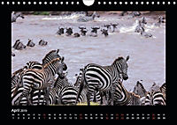 Abenteuer Safari (Wandkalender 2019 DIN A4 quer) - Produktdetailbild 4