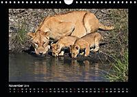 Abenteuer Safari (Wandkalender 2019 DIN A4 quer) - Produktdetailbild 11