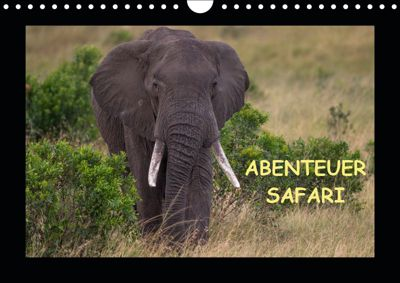 Abenteuer Safari (Wandkalender 2019 DIN A4 quer), Harald Pieta