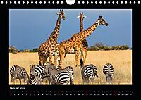 Abenteuer Safari (Wandkalender 2019 DIN A4 quer) - Produktdetailbild 1