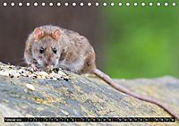 Abneigung und Ekel. Die unbeliebtesten Tiere (Tischkalender 2019 DIN A5 quer) - Produktdetailbild 2