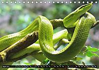 Abneigung und Ekel. Die unbeliebtesten Tiere (Tischkalender 2019 DIN A5 quer) - Produktdetailbild 4