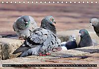 Abneigung und Ekel. Die unbeliebtesten Tiere (Tischkalender 2019 DIN A5 quer) - Produktdetailbild 8