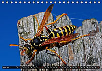 Abneigung und Ekel. Die unbeliebtesten Tiere (Tischkalender 2019 DIN A5 quer) - Produktdetailbild 6